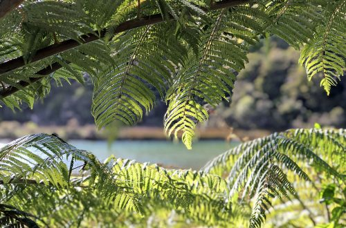 Abel Tasman National Park Nieuw-Zeeland