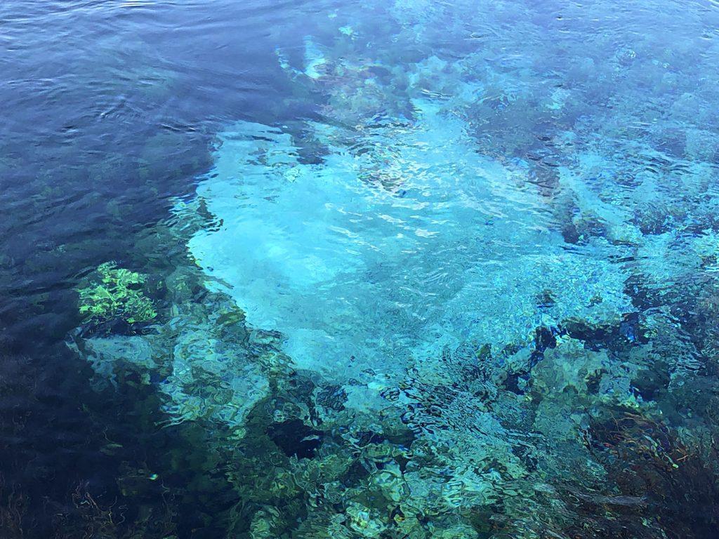 Het heldere water van de Pupu Springs in Nieuw-Zeeland