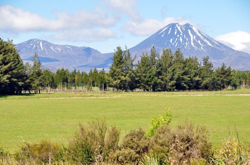 beste reistijd nieuw zeeland noordereiland